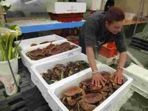 B2 Emilie et ses crustacés